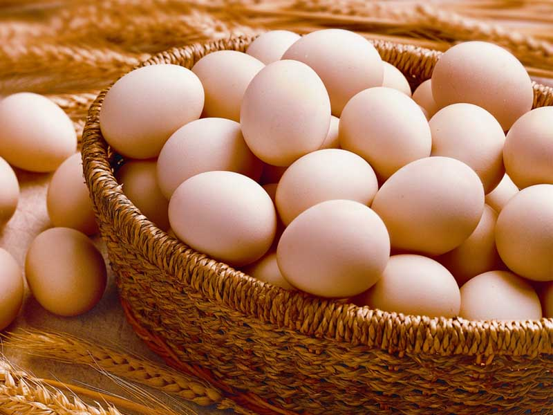 鸡蛋突破上行 填补价值洼地