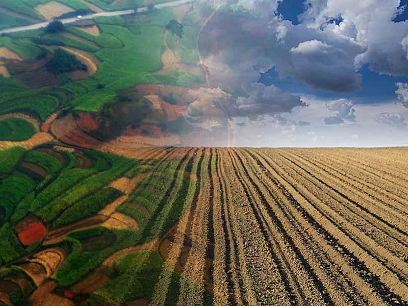 苹果期货对农户种植经营的作用