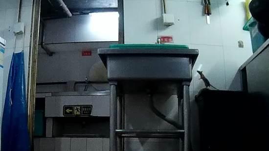 后厨老鼠爬进装食品柜子