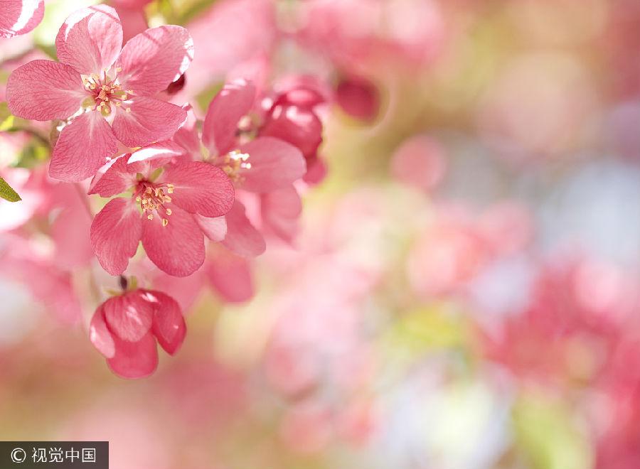 """哪位大诗人让七夕节变成了""""中国情人节"""" - 田园 - 田园的博客"""