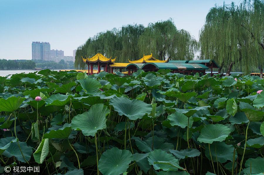 在趵突泉泉东侧隔来鹤桥有望鹤亭的一个茶社,有专为游人提供用趵突泉