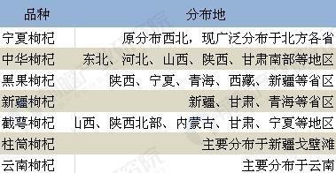 黑豹保温杯里装的除了中年危机 还有庞大的中国枸