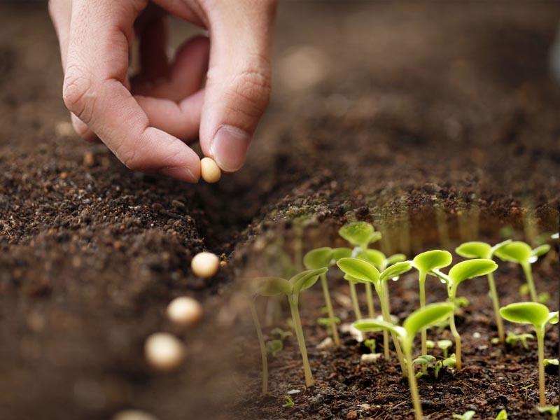 南美大豆恐面临干旱威胁