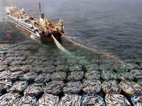 獐子岛十年一梦:扇贝亩产从百斤缩水到1斤 成烂摊子