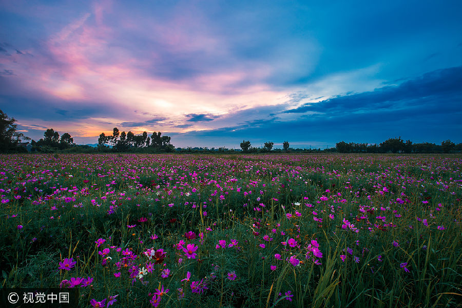 人生早点感悟的十句话 - 田园 - 田园的博客