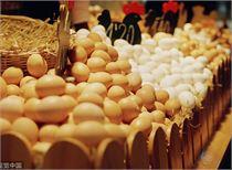存栏量恢复缓慢 鸡蛋期货后市易涨难跌