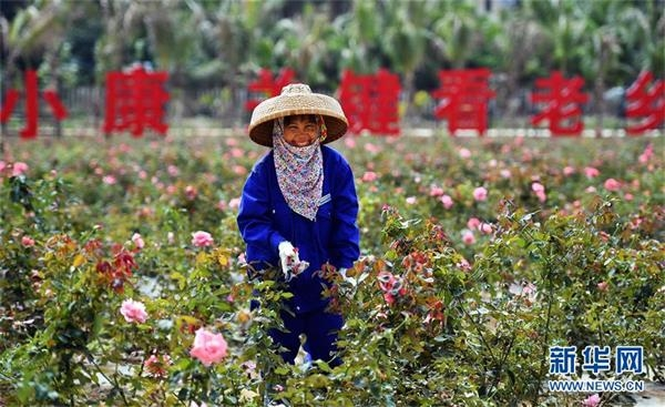 (新华全媒头条·图文互动)(12)创造新时代中国特色社会主义的更大稀奇——以习近平同志为中央的党中央关心经济特区发展纪实