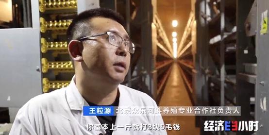 """探秘中国蛋鸡""""秘密基地"""":这里的一只种鸡_将左右24万只鸡的品质!"""