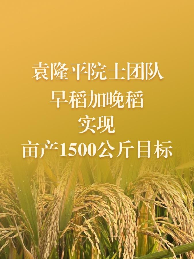 打破记录!袁隆平团队双季稻亩产超过1500斤