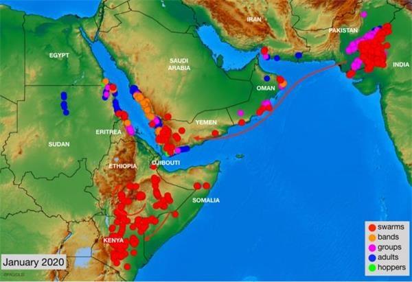 蝗群重回阿拉伯半岛 印、巴政府严阵以待!蝗灾将如何搅动市场?