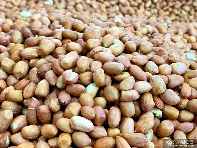 农业农村部:四大措施降低病虫害对农业丰收和粮食安全影响