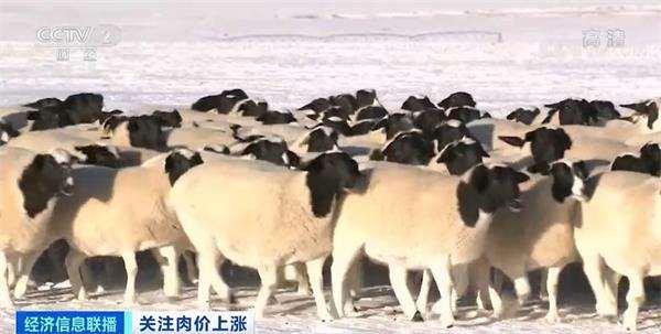 """临近春节 肉价""""涨""""声一片!""""牛魔王""""""""羊贵妃""""""""猪坚强""""都来了!啥原因?"""